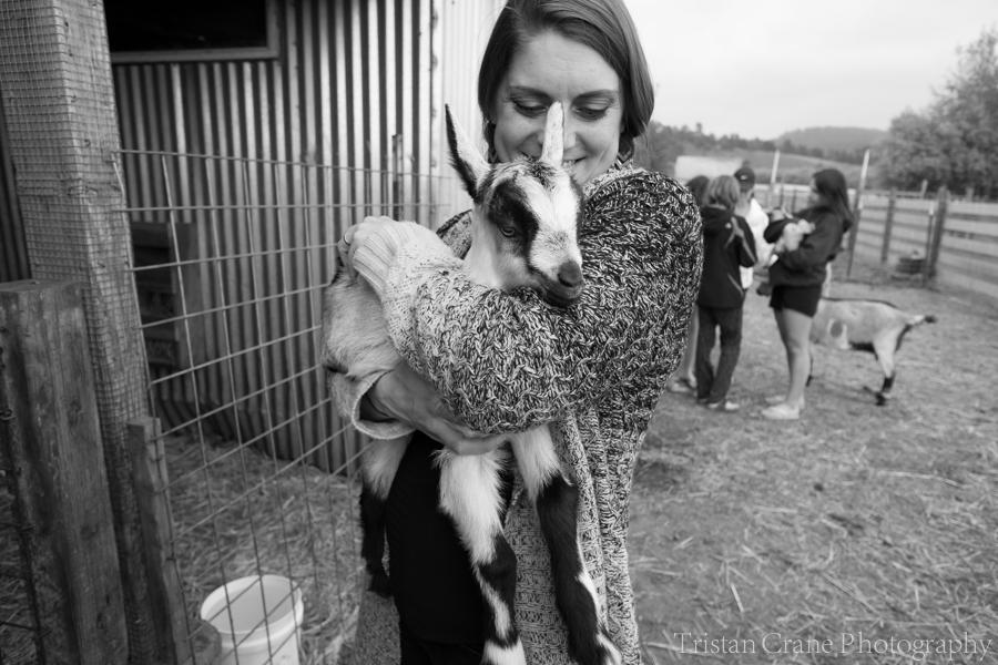 Baby Goats at Harley Farms